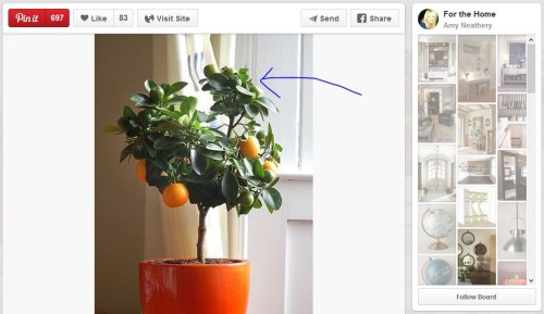 you cant grow citrus indoors