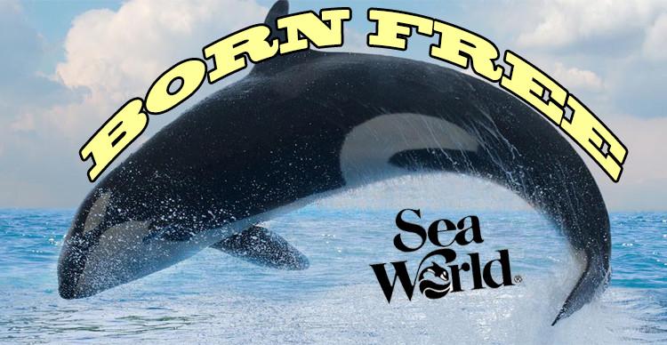 3 reasons to set the seaworld killer whales free